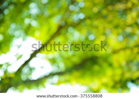 Green blurred background with bokeh and sunlight.