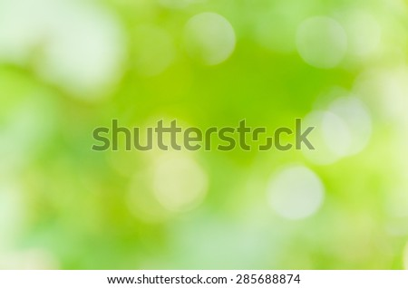 green bokeh background from nature under tree shade