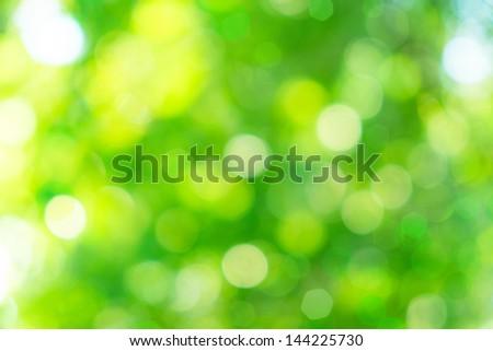 green bokeh from tree - stock photo