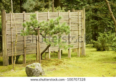 Green bonsai tree in a Japanese garden. - stock photo
