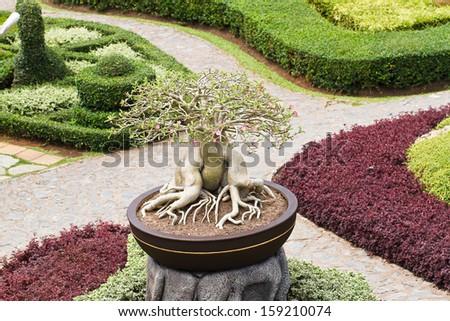 green bonsai tree in garden - stock photo
