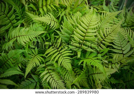 Green bracken plant background, close-up. - stock photo