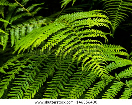 Green bracken plant in the forest - stock photo