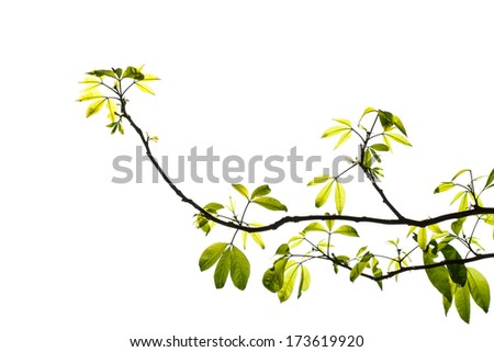 Green branch isolated on white - stock photo