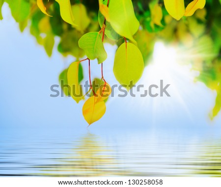 Green branch of a tree with leaf in the background sunny sky - stock photo