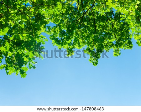 green branch of oak with many leaves