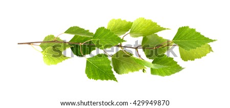green branch on a white background