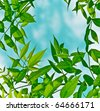 green branches - stock photo