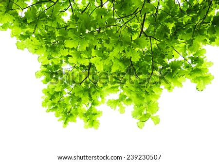 green branches of tree