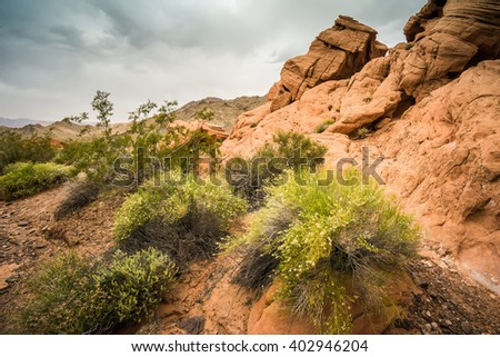 Green brush and bushes grow from soil in red sandstone rock formations of Nevada - stock photo