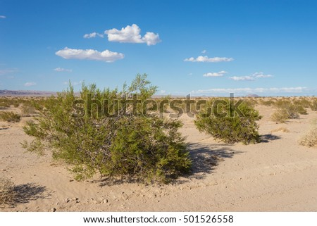 Green brush grows in the sandy barren desert of the southwest.