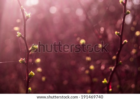 Green buds in spring with purple color cast - stock photo