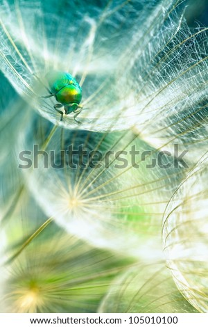 green bug in the dandelion,macro photo from the nature - stock photo