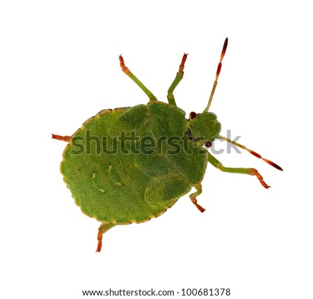 Bugs Isolated Stock Photos Images amp Pictures Shutterstock