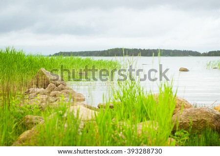 Green bulrush in a quiet Bay of the Finnish Gulf. Area for summer camping in the woods. Hamina, Finland, Suomi - stock photo