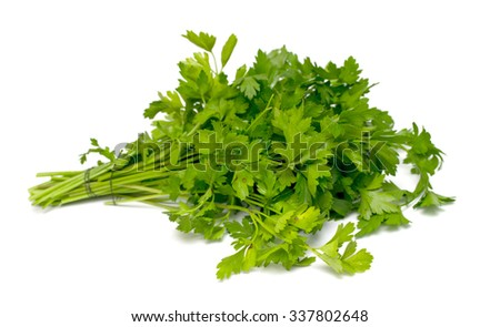 Green bunch of parsley on a white background - stock photo