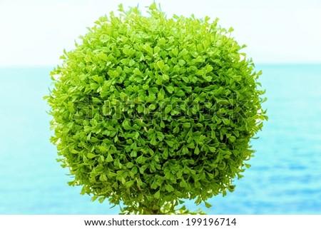 Green bush again sea background. - stock photo