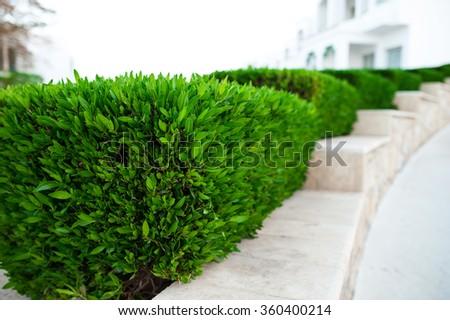 Green bush in the summer park. - stock photo