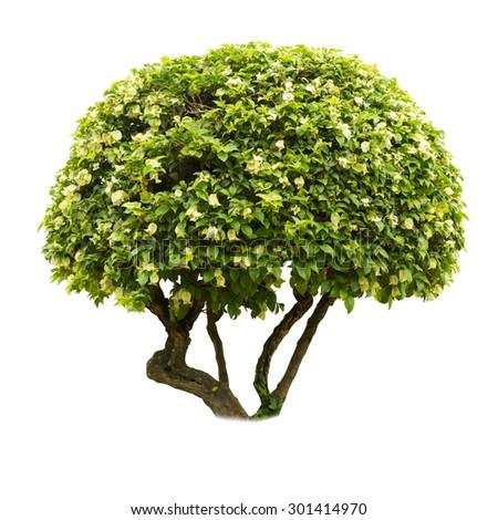 green bush isolated on white background - stock photo