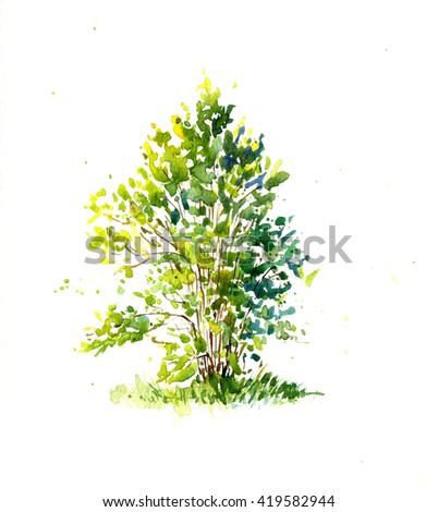 green bush, lit by the sun drawing by watercolor, aquarelle sketch of spring shrub, painting garden tree, hand drawn art background - stock photo
