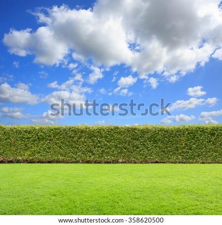 green bush on sky background. - stock photo