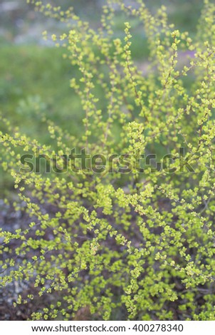 Green bush over nature background. Spring background. - stock photo