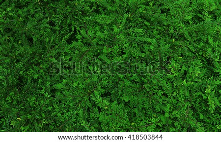 green bush texture , abstract natural background - stock photo