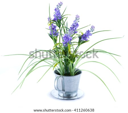 green bush with blue flowers isolated on white background - stock photo