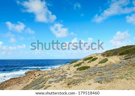 green bushes by Argentiera sea, Sardinia