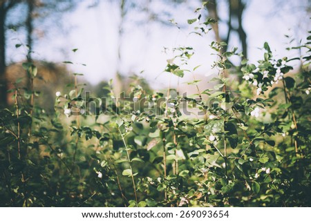 green bushes in the park - stock photo