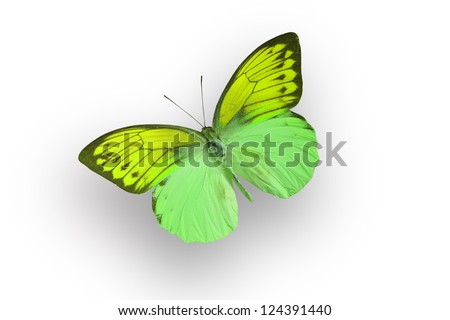 green butterfly and shadow on white