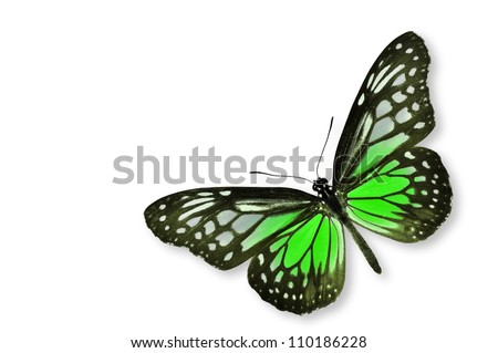 Green Butterfly flying