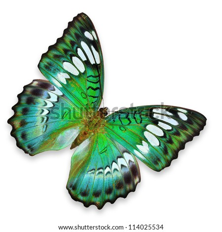 Green Butterfly flying - stock photo