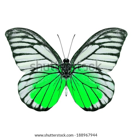 Green butterfly isolated on white background