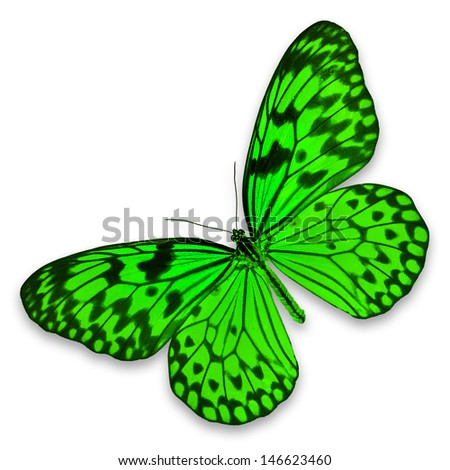 Green Butterfly on white background