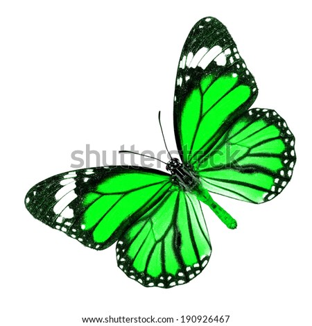 Green butterfly upper wing profile isolated on white background