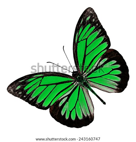 Green butterfly upper wing profile isolated on white background.