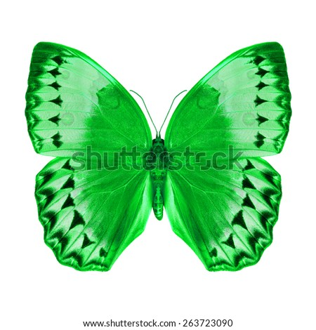 Green butterfly upper wing profile isolated on white background. - stock photo