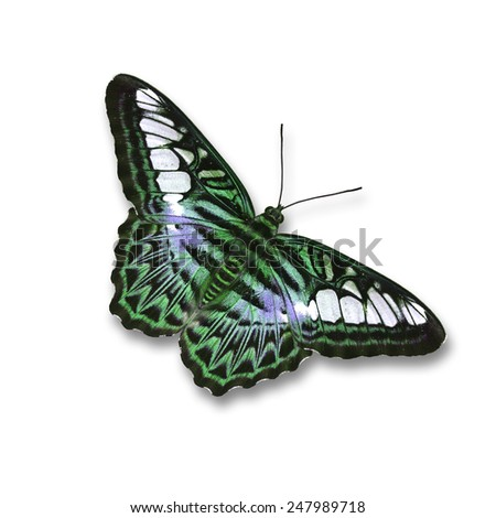 Green butterfly Wings isolated on white background, with clipping path