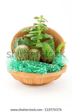green cactus and Succulents