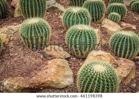 Green Cactus on small gravel
