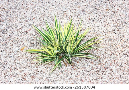 Green cactus with thorns. Cactus plants in garden. Cacti leaves. - stock photo