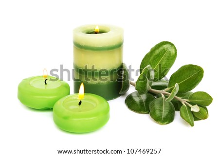 Green candles,  leaves isolated on gray background.