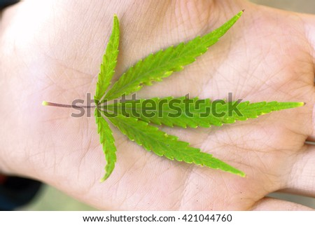 Green cannabis leaf in hand - stock photo