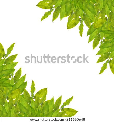 Green cassia fistula leaf frame isolated on white background