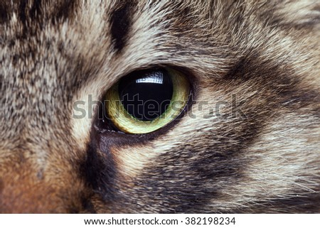 Green cat eye looking straight in camera - stock photo