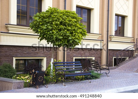 green catalpa tree growing in rockeries on the building background