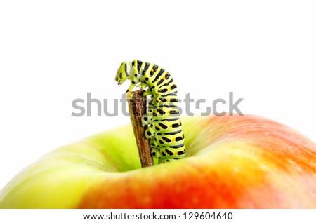 Green caterpillar on red apple. - stock photo
