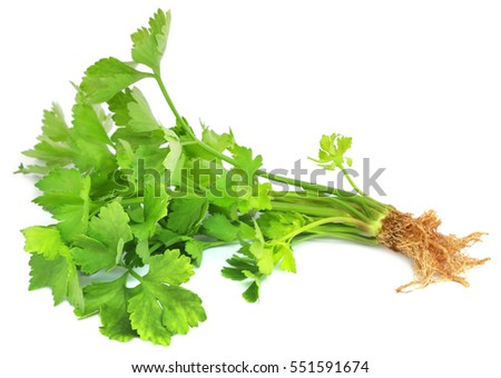 Green celery plant over white background