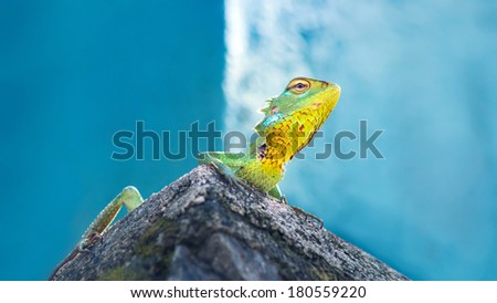 Green chameleon on the blue waterfall background. - stock photo